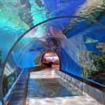 Oceanarium-Kopenhaga-Den-Bla-Planet